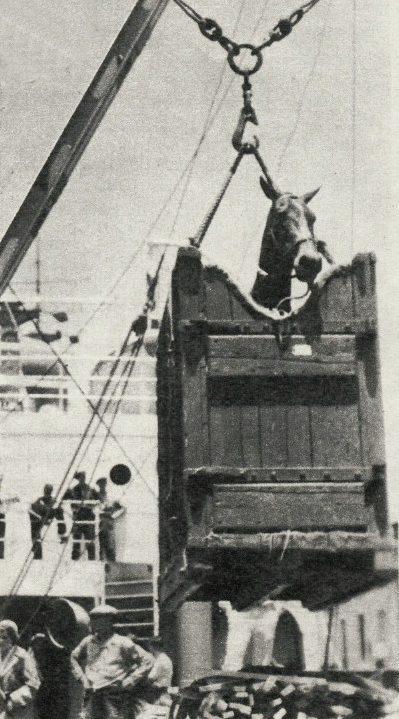 One of Leslie Howard's horses